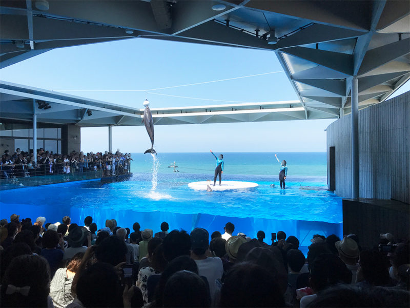 イルカショーは背後の日本海とのコラボがとてもキレイでした